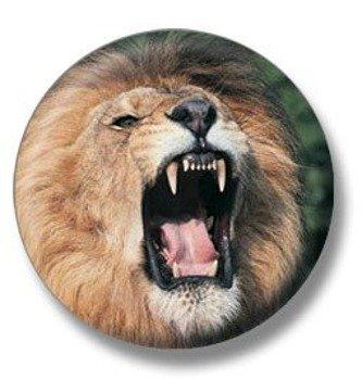 kapsel LION TABASSUM