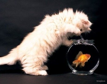 plakat KITTY AND GOLDFISH