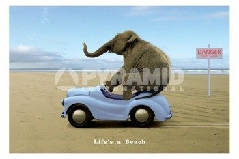 plakat LIFE'S A BEACH - ELEPHANT ON A CAR