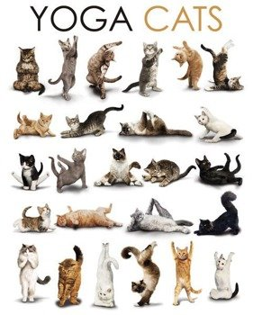 plakat YOGA - CATS COMPILATION