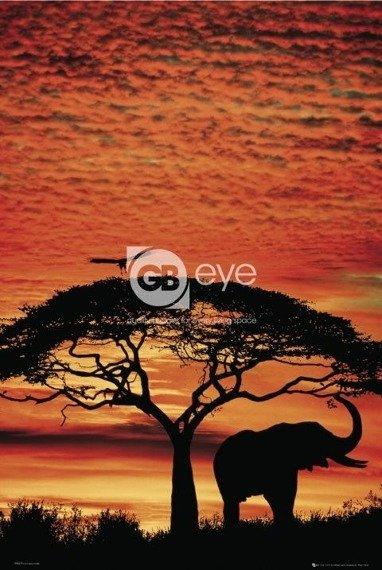 plakat AFRICA SUNSET - ELEPHANT
